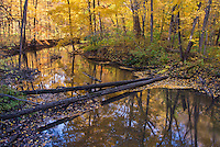 The Galien River flows through autumn woods in Warren Woods State Park in Berrien County, Michigan