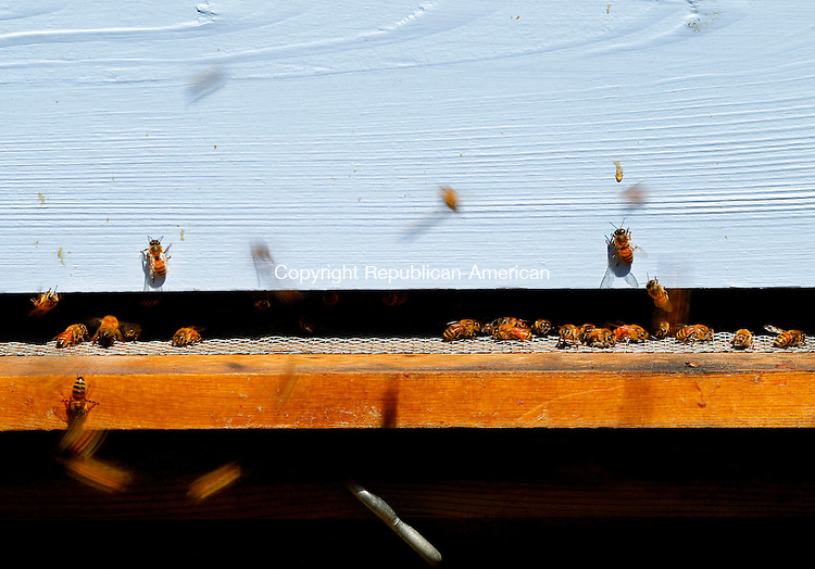 Terryville, CT-10 September 2012-091012CM14-  Bees swarm outside their hive at Susan Gray and Kate Moran's home Monday afternoon in Terryville.   Gray and her partner, Moran recently got into beekeeping, as they wanted pollinators for their beautiful gardens. Christopher Massa Republican-American