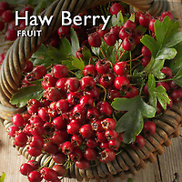 Hawthorn Berry | Haw Berries Pictures Photos Images & Fotos
