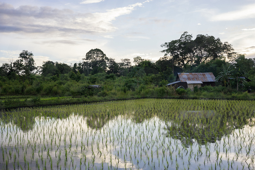 July 28, 2014 - Mondulkiri (Cambodia). View of a rice field outisde Busra village. © Thomas Cristofoletti / Ruom