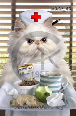 Samantha, ANIMALS, REALISTISCHE TIERE, ANIMALES REALISTICOS, funny, photos+++++Cranky Nurse Cat master,AUKP40,#a#