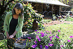 Linda Heller works on one of the many gardens at her isolated home on Beyond Yonder Road.  Heller grows number of flowers and herbs.  A festival held at the cabin each year centers around the herbs and diverse religious ceremonies.  Heller's festival brought more than 100 people to the holler at Beyond Yonder this fall.  Photo by Morgan Eads