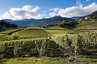 Switzerland, Canton Valais, Salgesch near Leuk: winegrowing at Rhone-Valley | Schweiz, Kanton Wallis, Salgesch bei Leuk: Weinanbau im Rhonetal