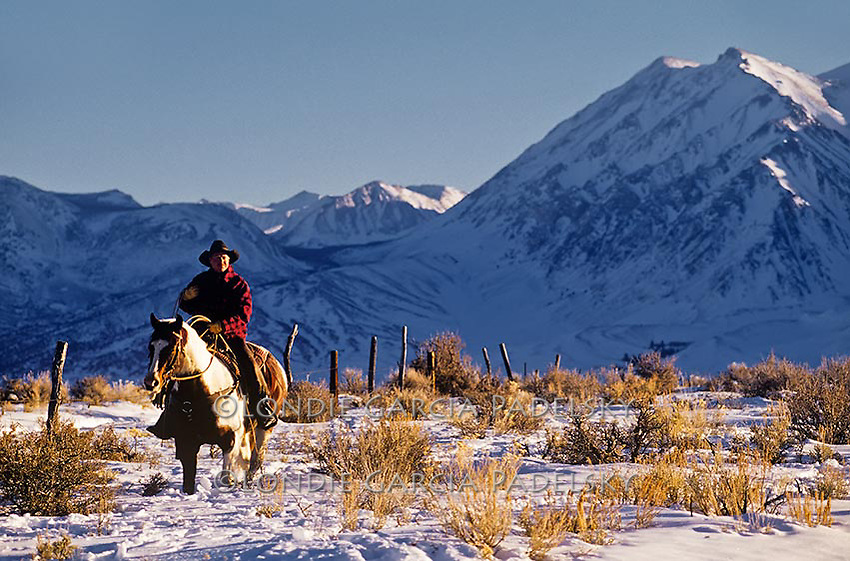 Cowboy riding paint horse in snow, Eastern Sierra, California