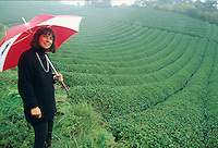 Green tea fields in the Uji City area produce the finest green tea in the world.