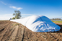 Forage maize for Anaerobic Digestion field stored in AgBag - Lincolnshire, October