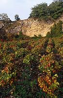 Europe/France/Rhône-Alpes/69/Rhône/Env Theize: Carrière de pierres dorées et vignoble du Beaujolais