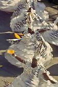 Rio de Janeiro, Brazil. Swirling twirling Bahiana samba dancers during the carnival parade.