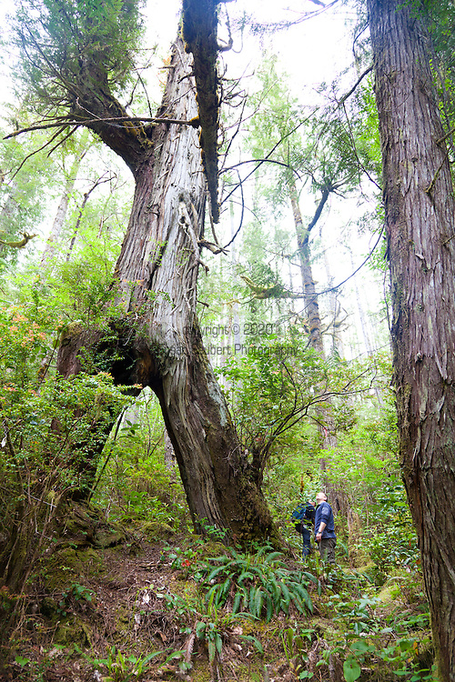 Eagle Nook Wilderness Resort and Spa is located on a remote area of Vancouver Island.   Hiking through the private forests is one of the many adventures available to guests at the resort.  Manager Patrick Braspenning leads a hike through the woods with his dog, Chase.