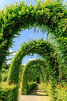 France, Loiret (45), Chilleurs-aux-Bois, château  de Chamerolles et jardins d'inspiration renaissance, arches de charmille