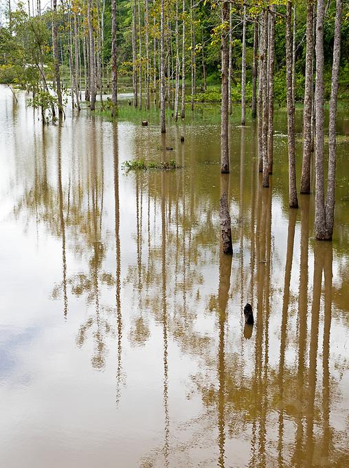 Trees during the Monsoon season, near Bayon Temple, Angkor Wat area, Cambodia