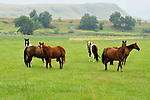 HORSES CROW INDIAN REVS FORT SMITH MONTANA