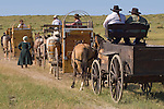 A wagon train driven by pioneers in the show arena in  Hardin, Montana during the Reenactment of The Battle of the Little Bighorn. Model Release.