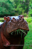 Carl, ANIMALS, wildlife, photos(SWLA3885,#A#)
