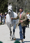 April 23, 2014: Avebury and Andrew Nicholson during the first horse inspection at the Rolex Three Day Event in Lexington, KY at the Kentucky Horse Park.  Candice Chavez/ESW/CSM