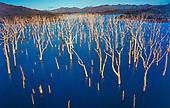 Forêt noyée, rivière bleue