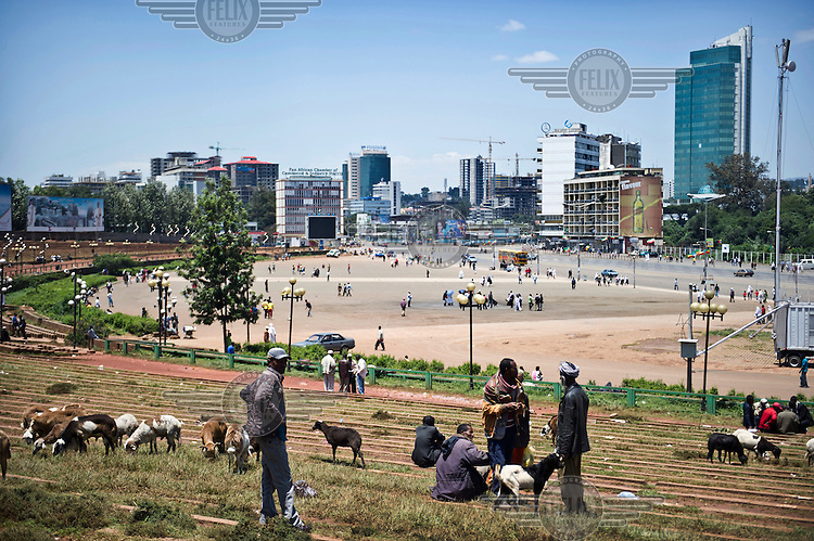 Farmers graze their goats next to Meskal Square in Addis Ababa.