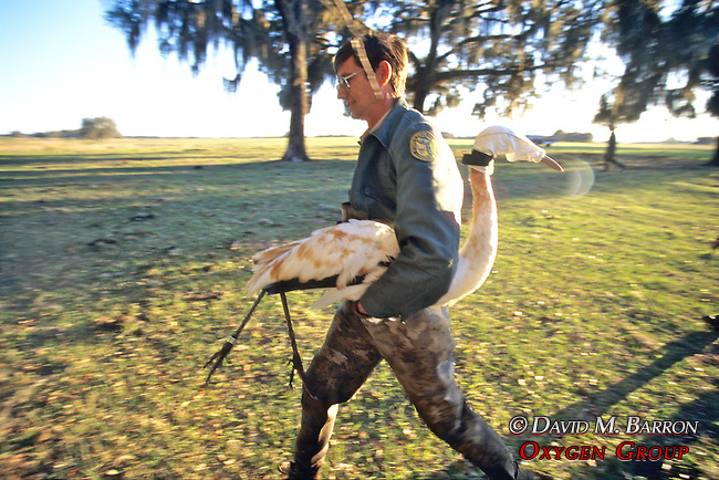 Whooping Crane Carried To Debrailing