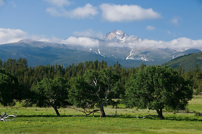 Longs Peak, clouds, quaking aspen, Populus tremuloides, trees, forest, mountains, landscape, scenic, summer, June, morning, Rocky Mountain National Park, Colorado, Rocky Mountains, USA