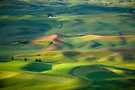 Whitman County, WA<br /> Morning light on the farms and rolling green hills of the Palouse in eastern Washington, from Steptoe Butte State Park