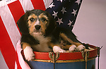 Dog on drom with American flag