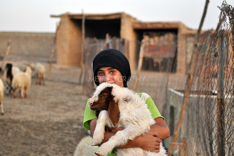 DOWDA, IRAQ:  Niaz (12) holds a lamb...Iraqi forces decimated the Dowda area in Germian during the 1988 Anfal genocidal campaign against the Kurds.  Daily life continues is this extremely harsh part of Iraq...Photo by Aram Karim/Metrography