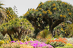 Huntington Library, Pasadena, California, Florals, Desert, Cactus, Japanese Gardens, Spring is here!