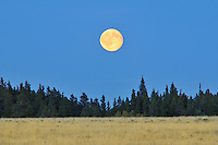 Harvest moon on the prairie<br /> Cypress Hills Provincial Park<br /> Saskatchewan<br /> Canada