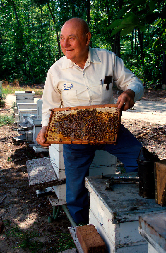 A smiling beekeeper lifts a bee encrusted honeycomb from a beehive in order to harvest the honey.