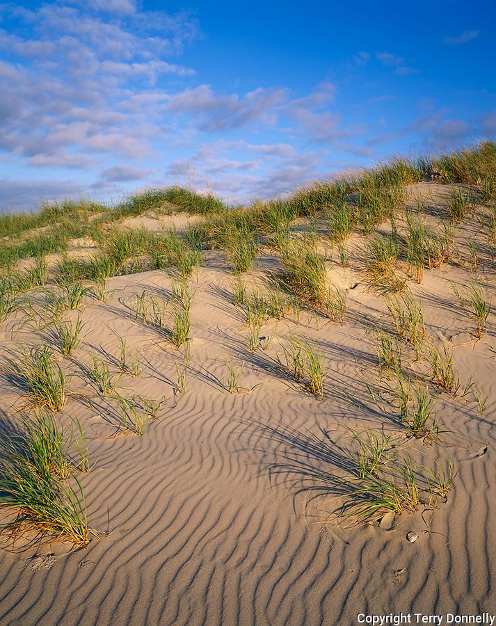 Cape Hatteras National Seashore, NC<br /> Atlantic surf, beach grasses and rippled sand of Ocracoke Island beaches