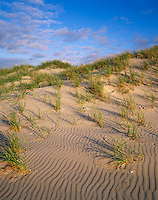 Cape Hatteras National Seashore, NC<br /> Atlantic surf, beach grasses and rippled sand of Ocracoke Island beaches