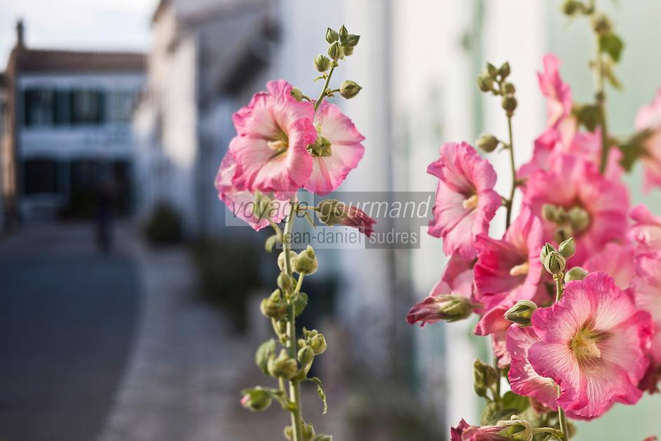 Europe/France/Poitou-Charentes/17/Charente-Maritime/Ile de Ré/Ars-en-Ré: Roses trémières dans les ruelles du village