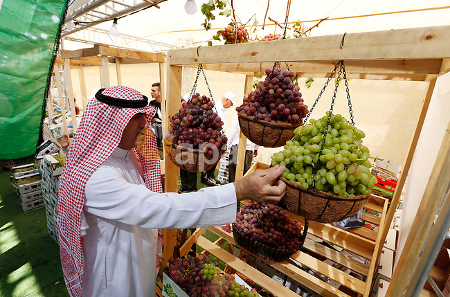 Palestinians display Grapes during the Palestinian grapes festival in Halhoul village, near the West Bank city of Hebron, on September 10, 2018. Hebron is very famous in grape production as it contains many fields of grapes, the summer is the season of harvesting. Photo by Wisam Hashlamoun
