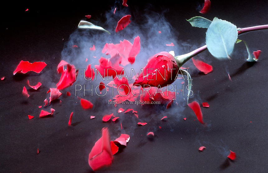 THE CRYOGENIC EFFECT OF LIQUID NITROGEN ON A ROSE<br /> (Variations Available)<br /> Shattering The Frozen Rose<br /> A rose which is normally soft and flexible becomes rigid when cooled to 77.3 K above absolute zero as do many materials that are flexible at room temperature.