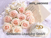 Alfredo, FLOWERS, BLUMEN, FLORES, photos+++++,BRTOLMN38402,#f#, EVERYDAY
