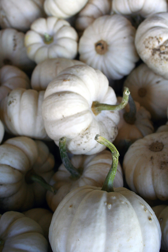 Mini white pumpkins