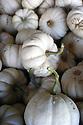 Mini white pumpkins