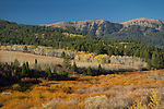 Idaho, East, Driggs, Autumn color in the Bighole Mountains.