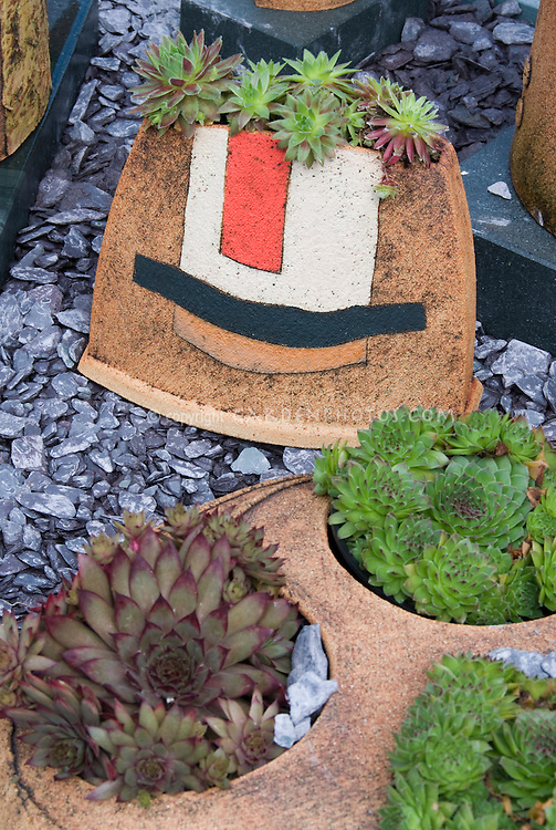 Sempervivums and sedums succulent plants in interesting clay containers by Axios Gallery with modern designs