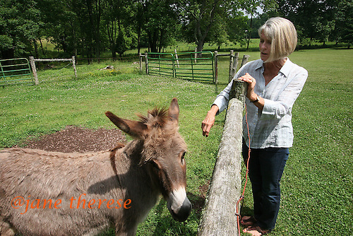 Karen Budd with her donkey Fiona in Erwinna, Pa., on Friday June 10, 2010. Karen and her husband Boyce, converted a 1-bedroom 2-story barn into a living space. The couple rent out the space, as well as use for family holiday gatherings. Jane Therese For The New York Times