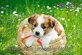 Marek, ANIMALS, REALISTISCHE TIERE, ANIMALES REALISTICOS, dogs, photos+++++,PLMP3006,#a#, EVERYDAY