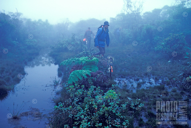 EDITORIAL ONLY. Hiking through the mists of Alakai Swamp, Kauai
