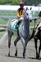Awesome Maria (no. 5), ridden by John Velazquez and trained by Todd Pletcher, wins the 35th running of the grade 3 Rampart Stakes for fillies and mares four years old and upward on March 31, 2012 at Gulfstream Park in Hallandale Beach, Florida.  (Bob Mayberger/Eclipse Sportswire)