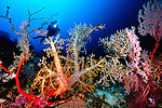 diver admiring extensive soft coral coverage