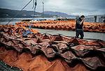 November 2002-Corcubión, A Coruña. The Prestige tanker broke apart and sank November 19 off the coast of Spain, spilling an estimated 17,000 tons of oil into the sea and taking 60,000 tons to the bottom with it. © Pedro Armestre..El desastre del Prestige se produjo cuando un buque petrolero monocasco resultó accidentado el 13 de noviembre de 2002, mientras transitaba cargado con 77.000 toneladas de petróleo, frente a la costa de la Muerte, en el noroeste de España, y tras varios días de maniobra para su alejamiento de la costa gallega, acabó hundido a unos 250 km de la misma. La marea negra provocada por el vertido resultante causó una de las catástrofes medioambientales más grandes de la historia de la navegación, tanto por la cantidad de contaminantes liberados como por la extensión del área afectada, una zona comprendida desde el norte de Portugal hasta las Landas de Francia. El episodio tuvo una especial incidencia en Galicia, donde causó además una crisis política y una importante controversia en la opinión pública..El derrame de petróleo del Prestige ha sido considerado el tercer accidente más costoso de la historia. © Pedro Armestre
