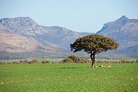 Lone Tree inspiration