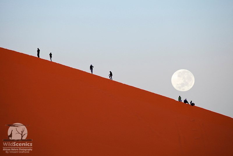 People climbing 'Dune 45' at sunrise and moonset