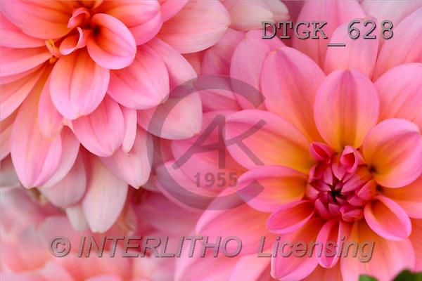 Gisela, FLOWERS, photos(DTGK628,#F#) Blumen, flores, retrato