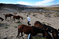 Most residents of Hidden Valley love the wild horses that live near their homes outside of Reno.  However, some folks find them a problem so the wild horses have been fenced out of the subdivision.    <br />