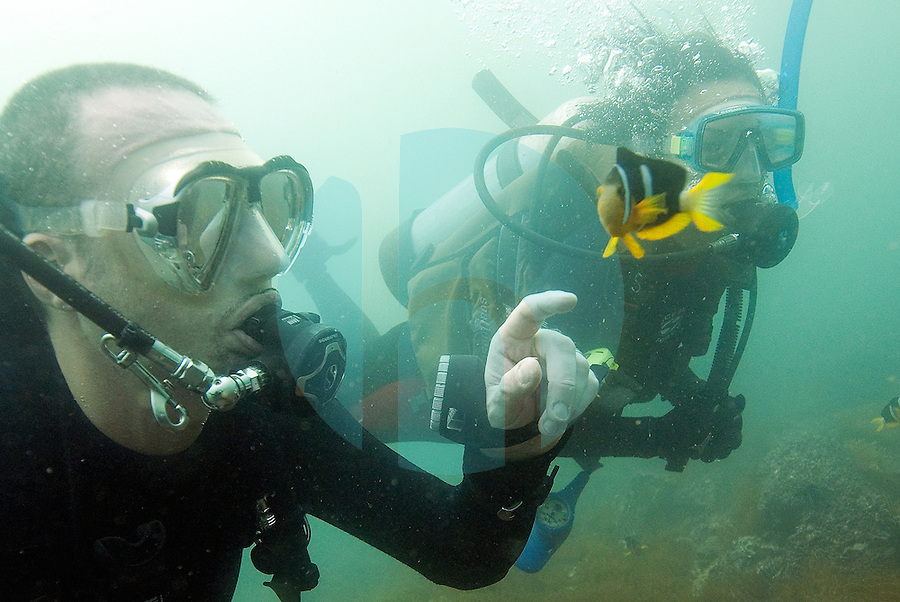 "20080720_HONG KONG_ A pair of divers play with an anemonefish, while diving the ""Trio Islands"" in Hong Kong's Sai Kung District.  The divers are part of a British Sub Aqua Club or BSAC dive expidition.  Photographer: Daniel J. Groshong/Tayo Photo Group"